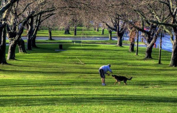 Harris Green Park